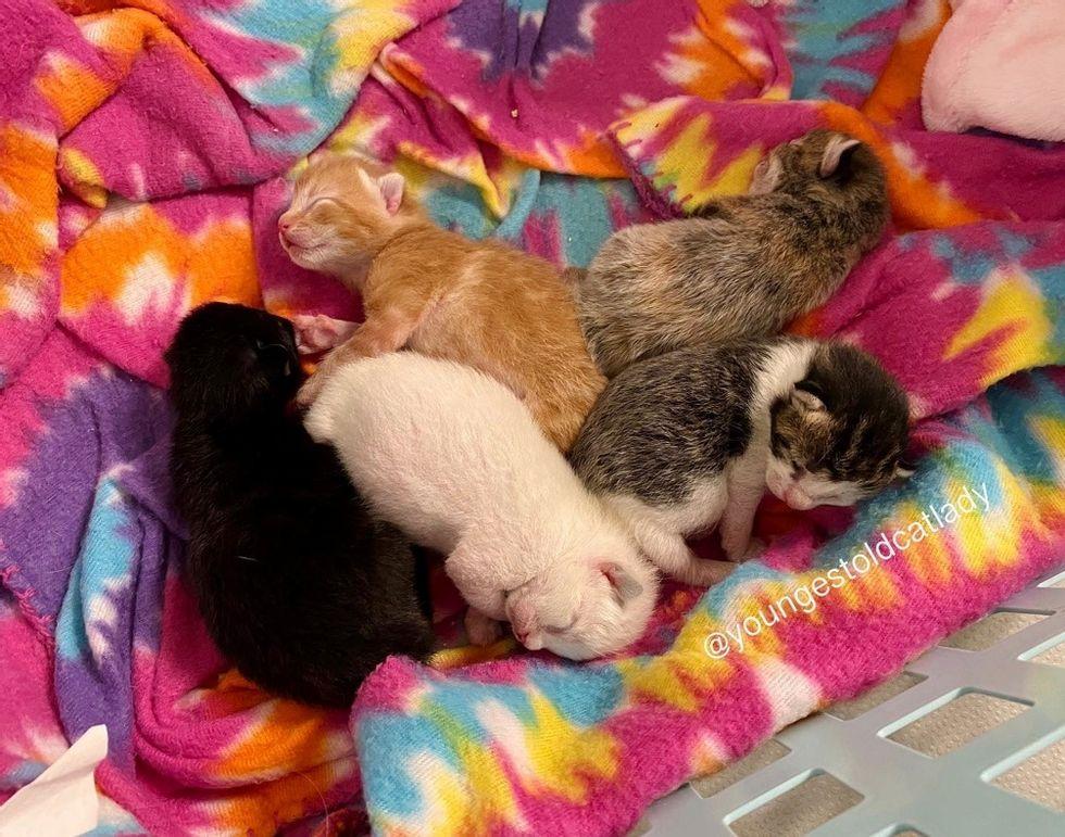 Grupo de gatitos