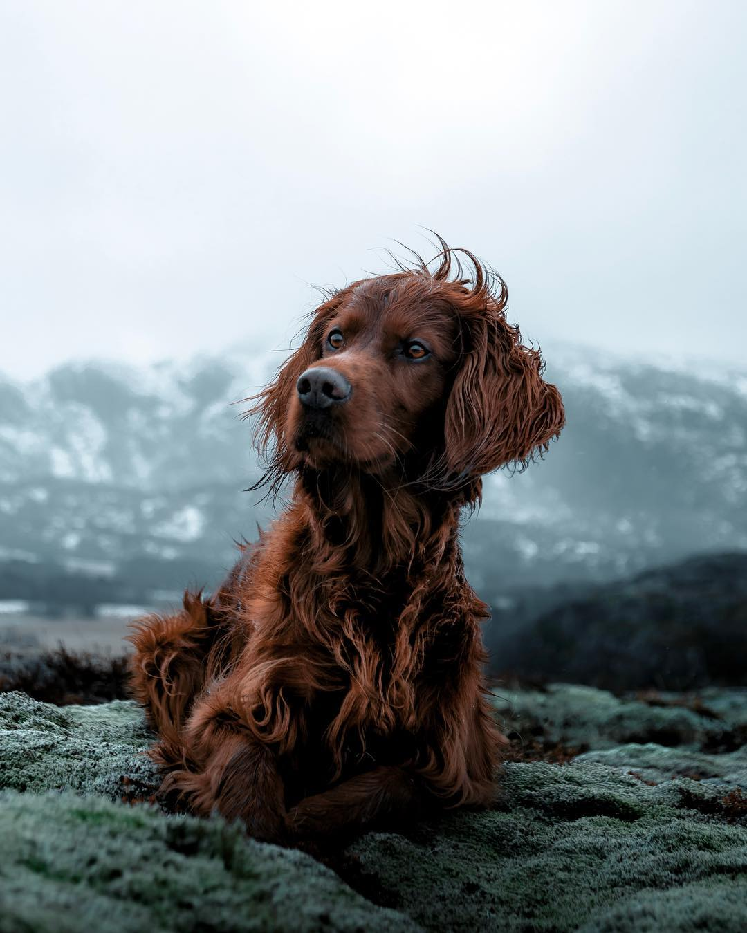 Hermosos perro en montaña