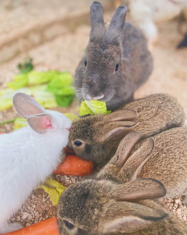 Hombre da refugio conejos