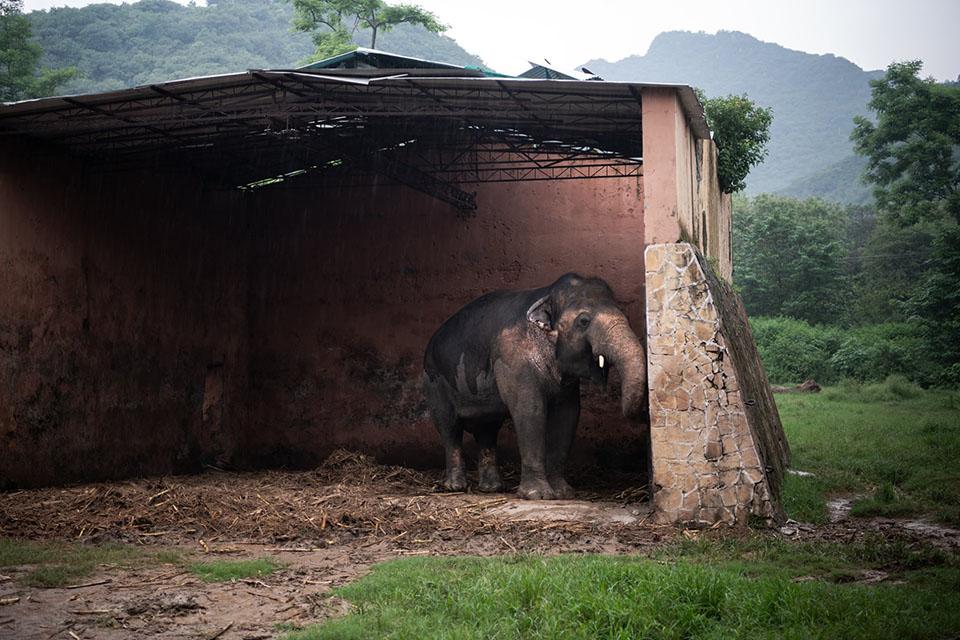 Kaavan en recinto