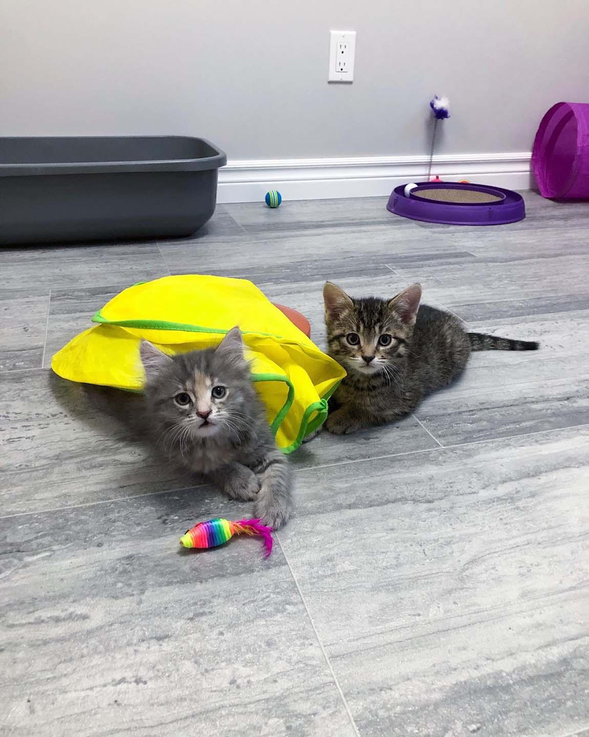 Lindos gatitos bebés