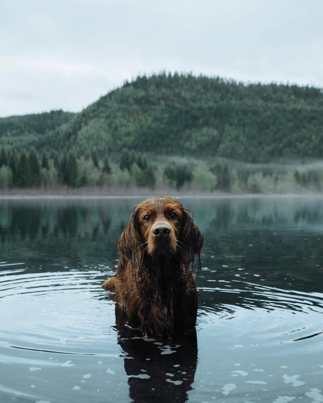 Mascota en el lago