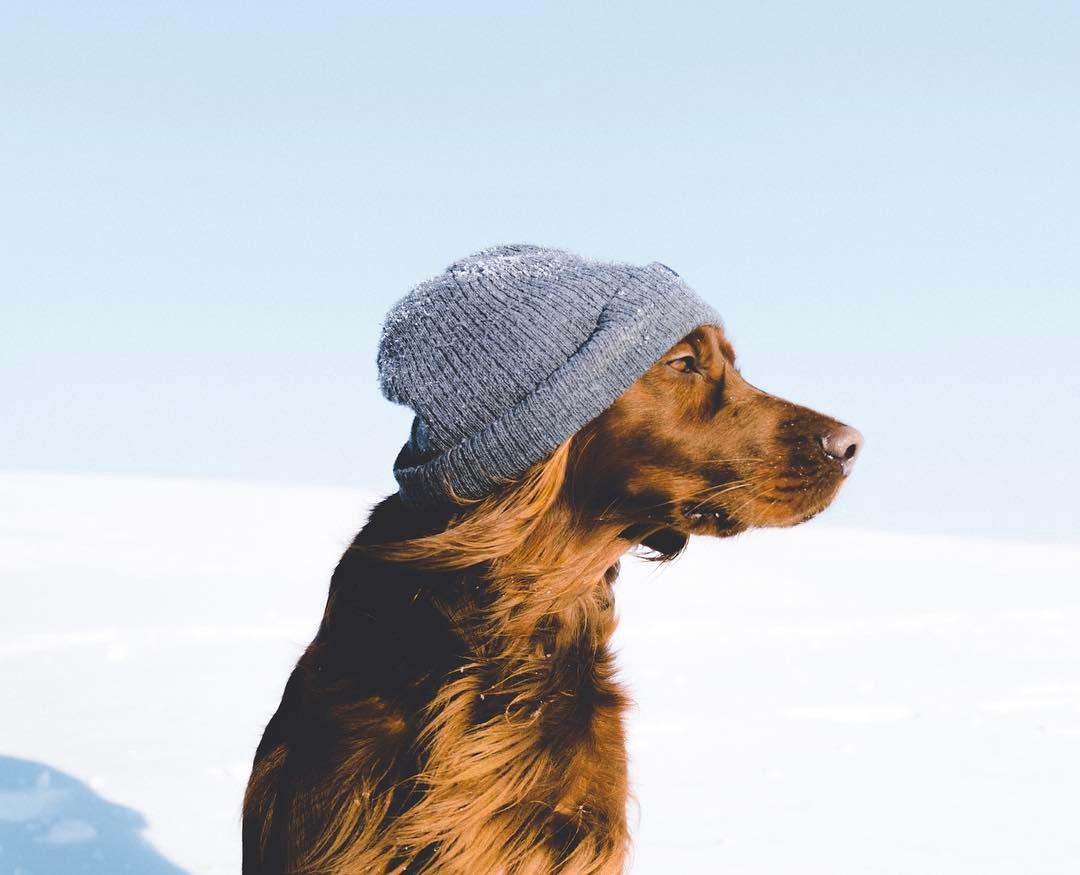 Mascota usa gorro para nieve