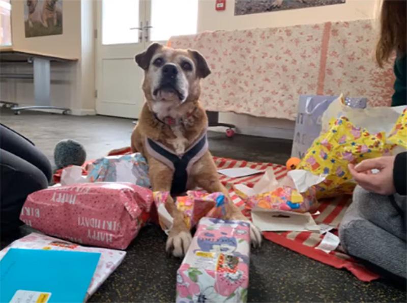 Molly regalos