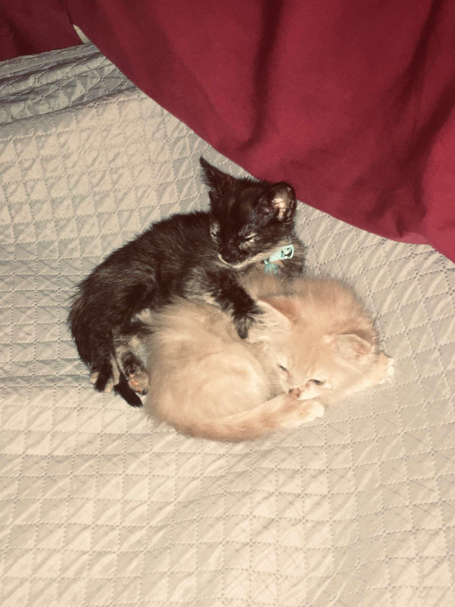 Nuevo hogar para gatito rescatado