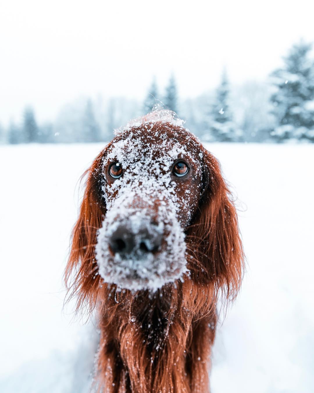 Hermosas fotos de perro en la nieve