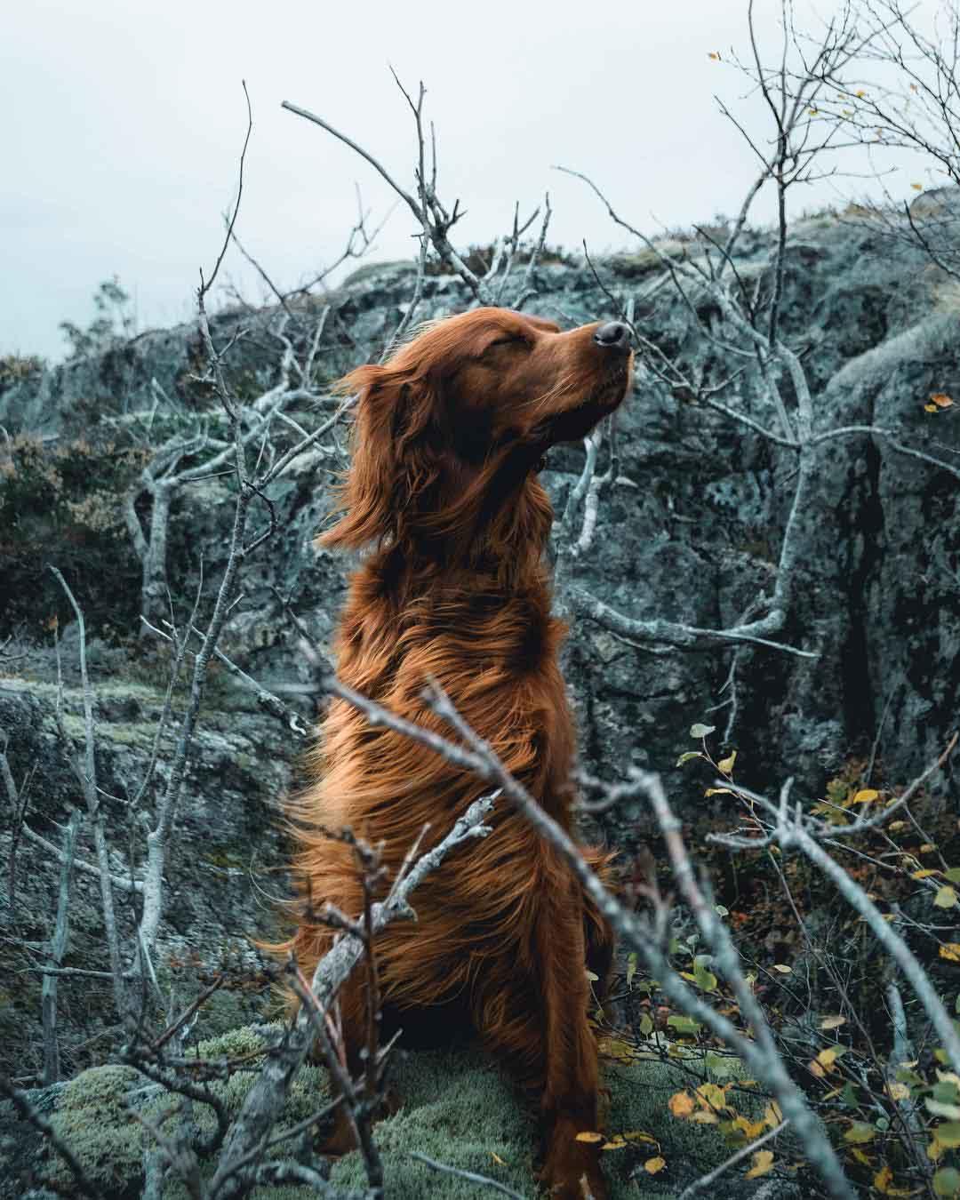 Fotos hermosas de perro contra viento