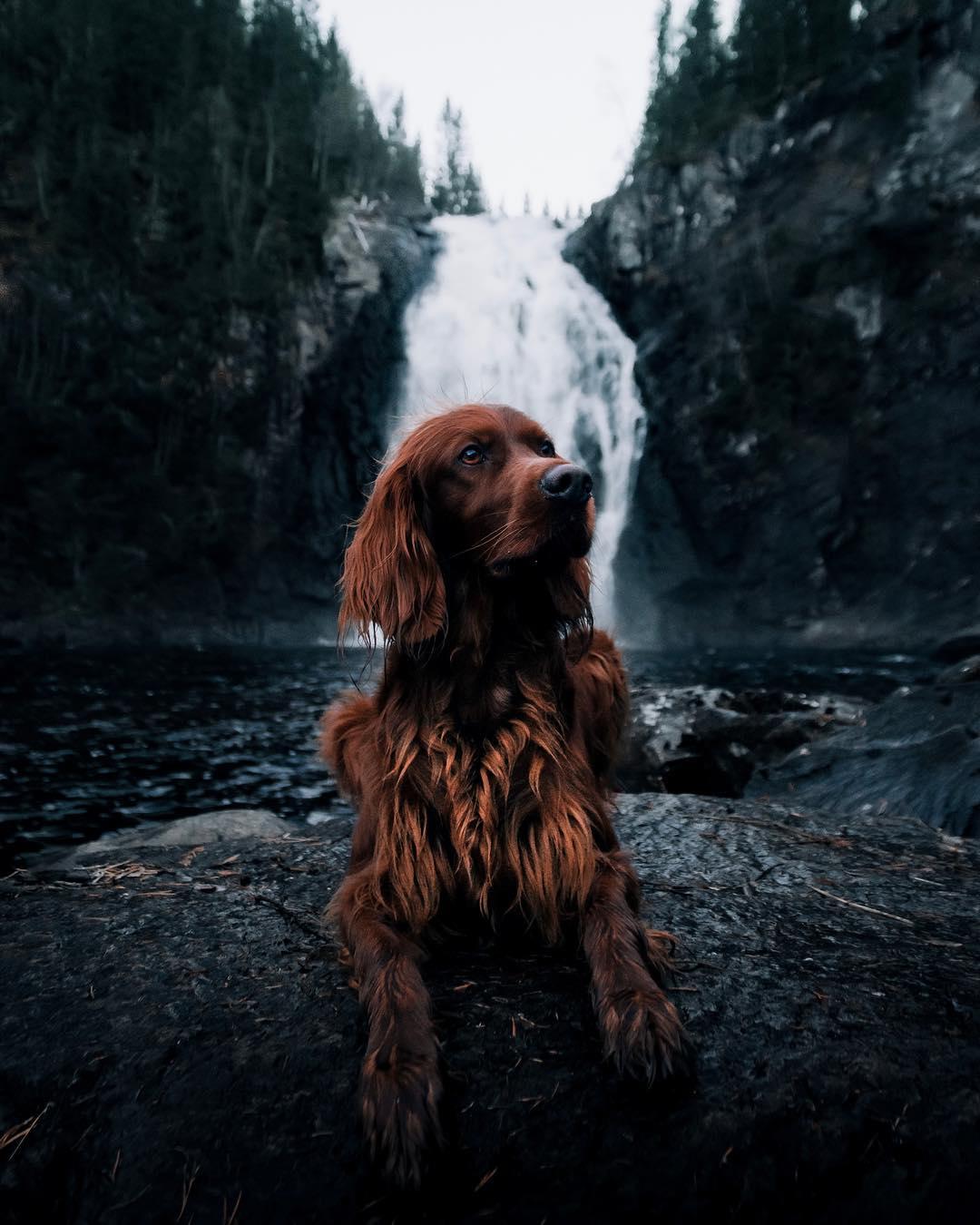 Perro y cascada de agua