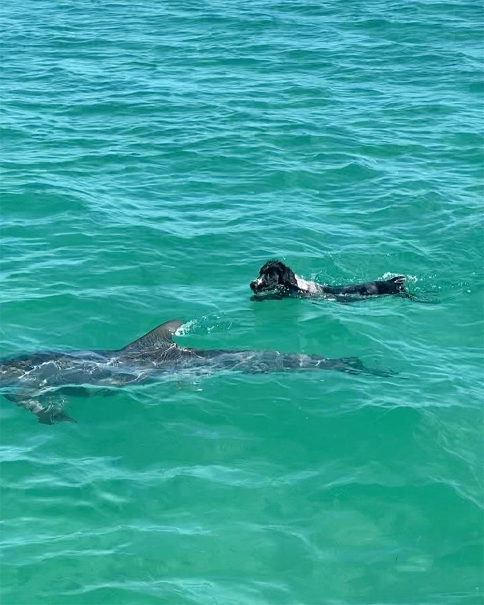 Perro y delfín