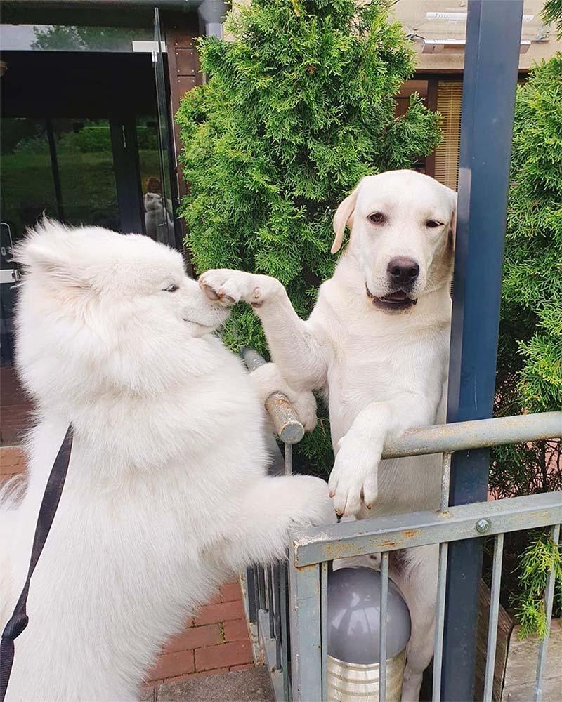 Perros reaccionan palabras
