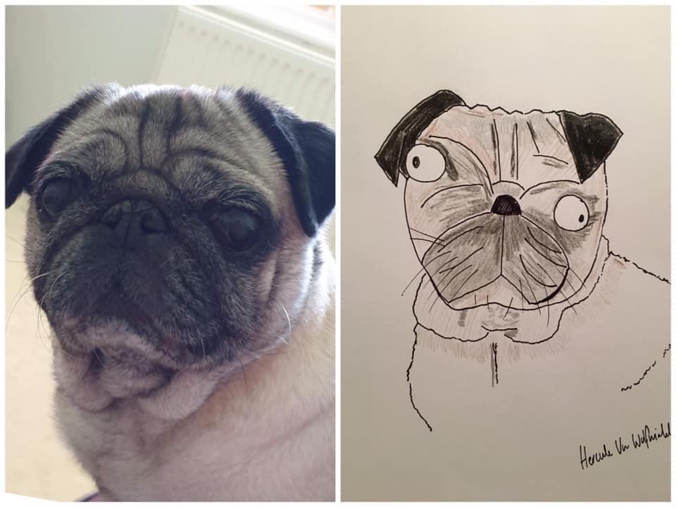 Pug retrato