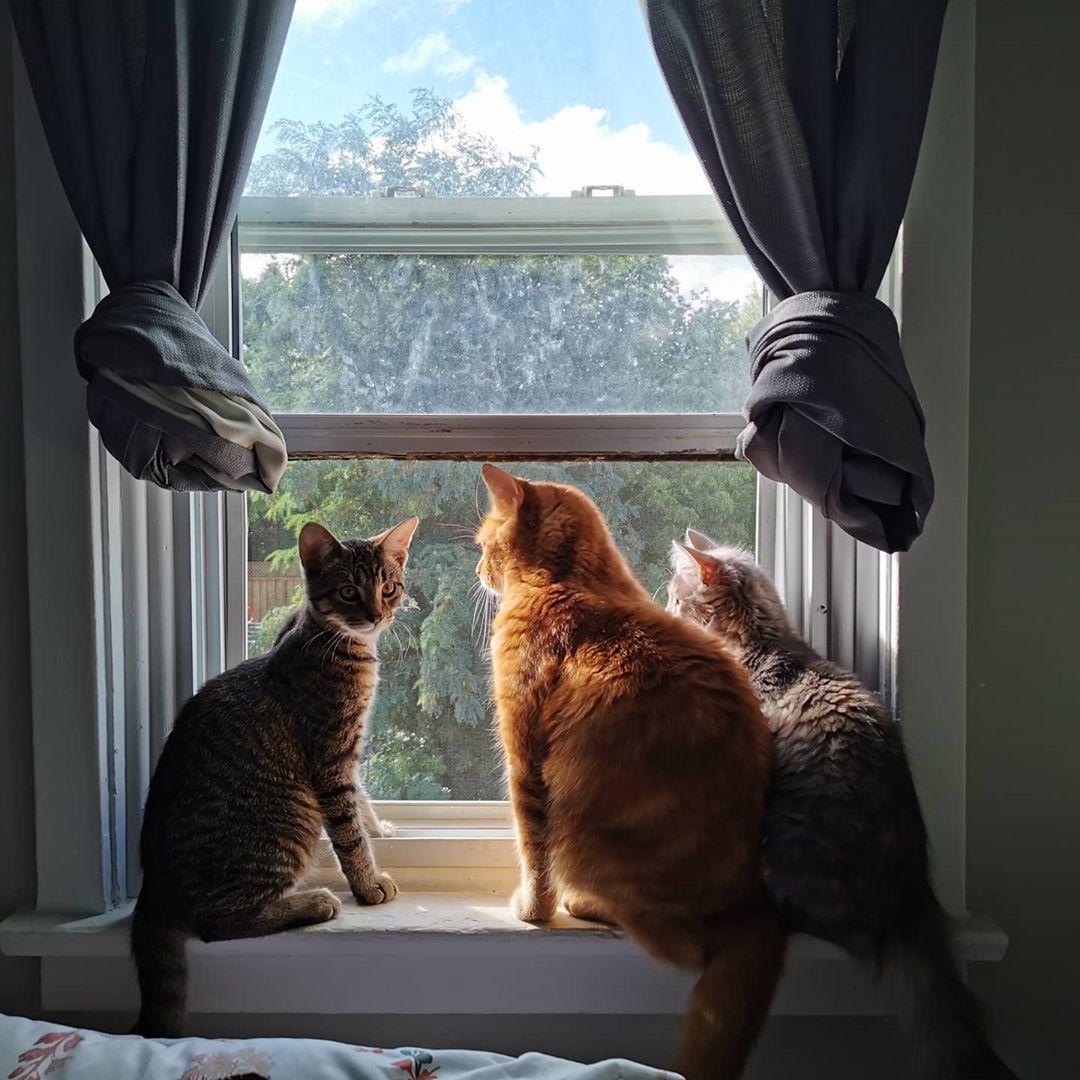 Tres gatitos en la ventana