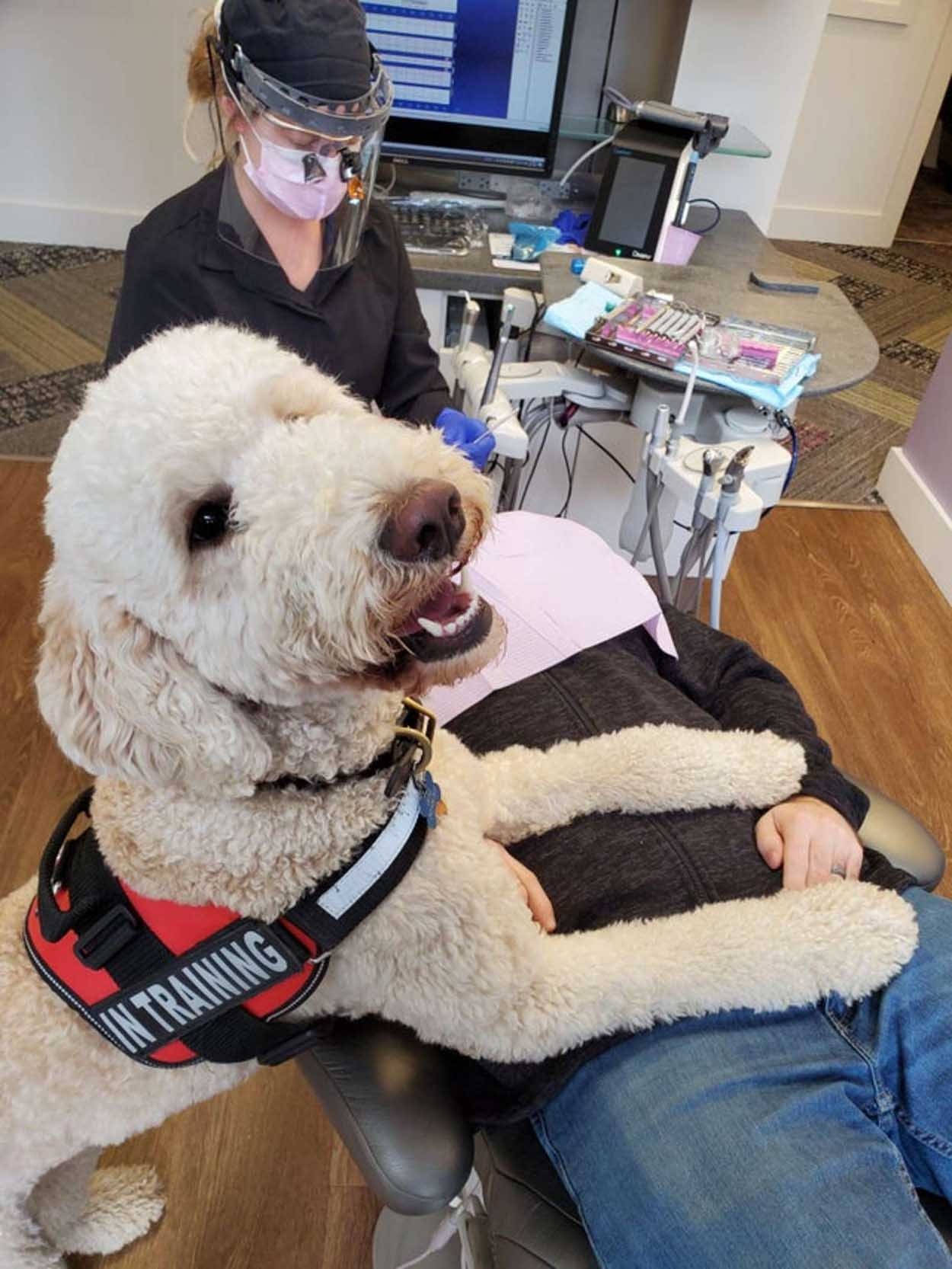 Adorable perro dentista