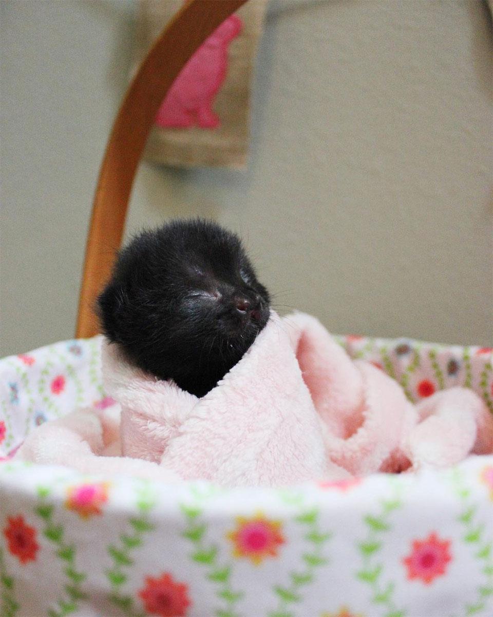 Bebé gatita está decidida