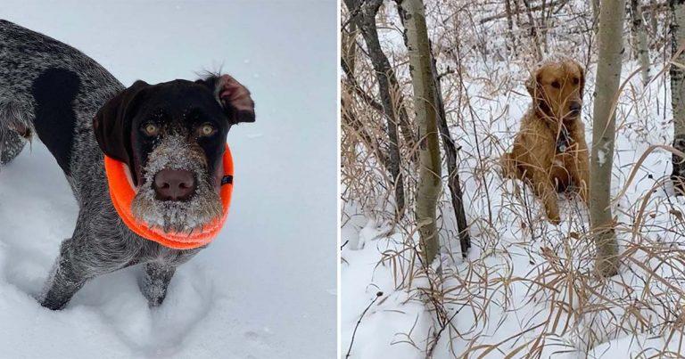 Buen perro olfatea a alguien que necesitaba su ayuda en la nieve