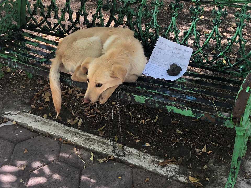 Cachorro dejado en banca de un parque