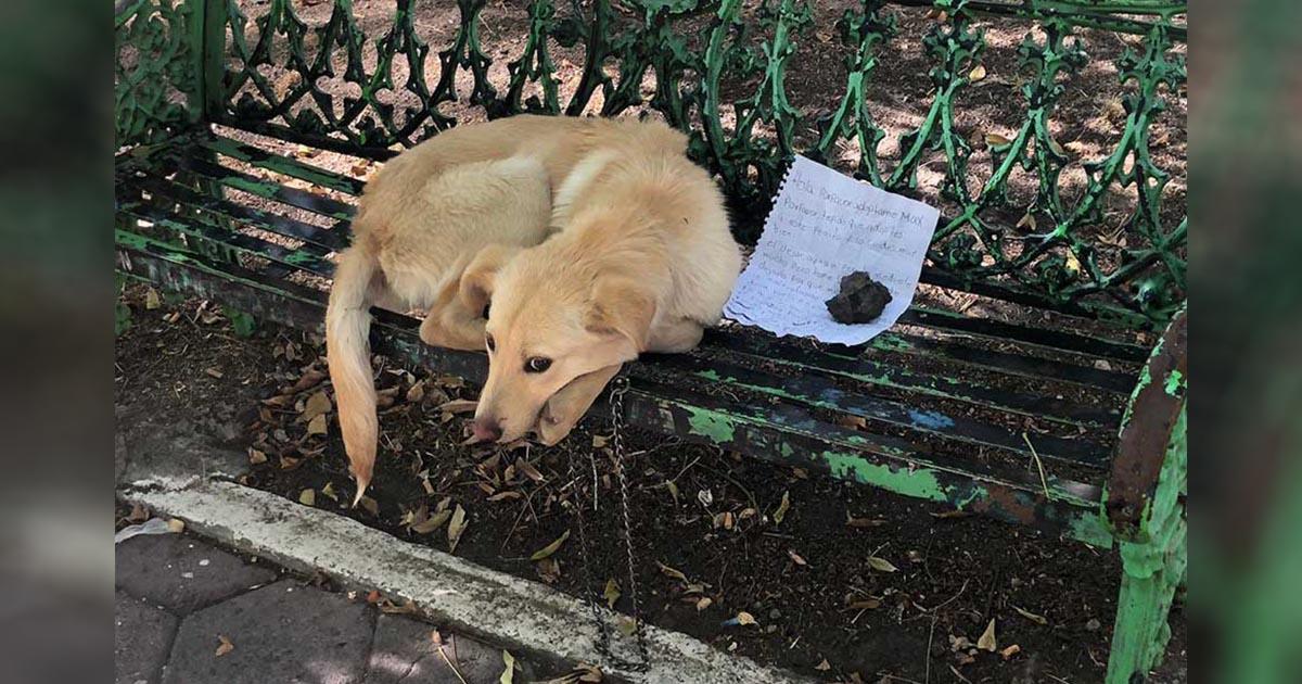 Cachorro dejado en la banca del parque junto a una carta aprende a confiar de nuevo
