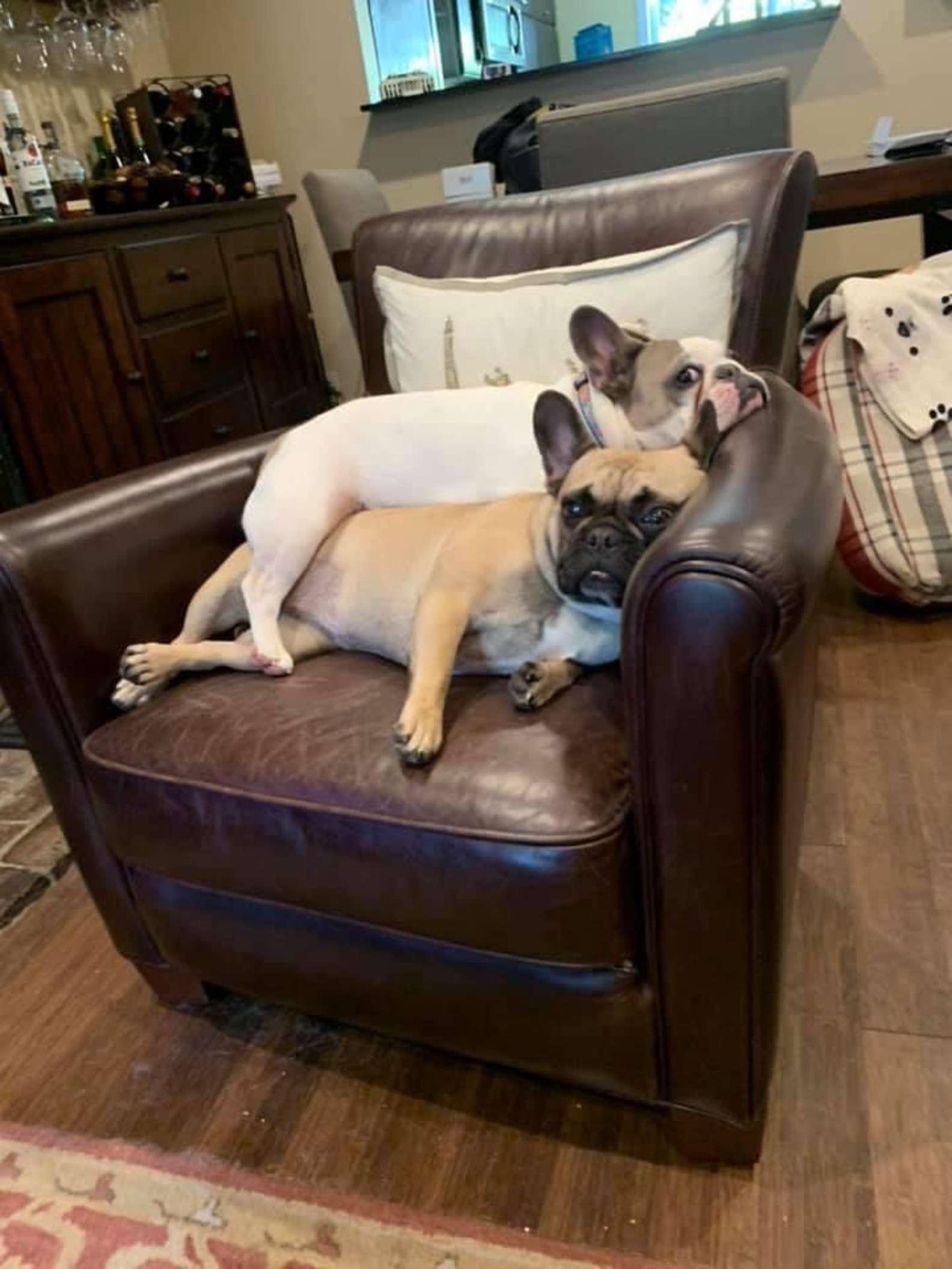 Dos dulces perritos en el sofá