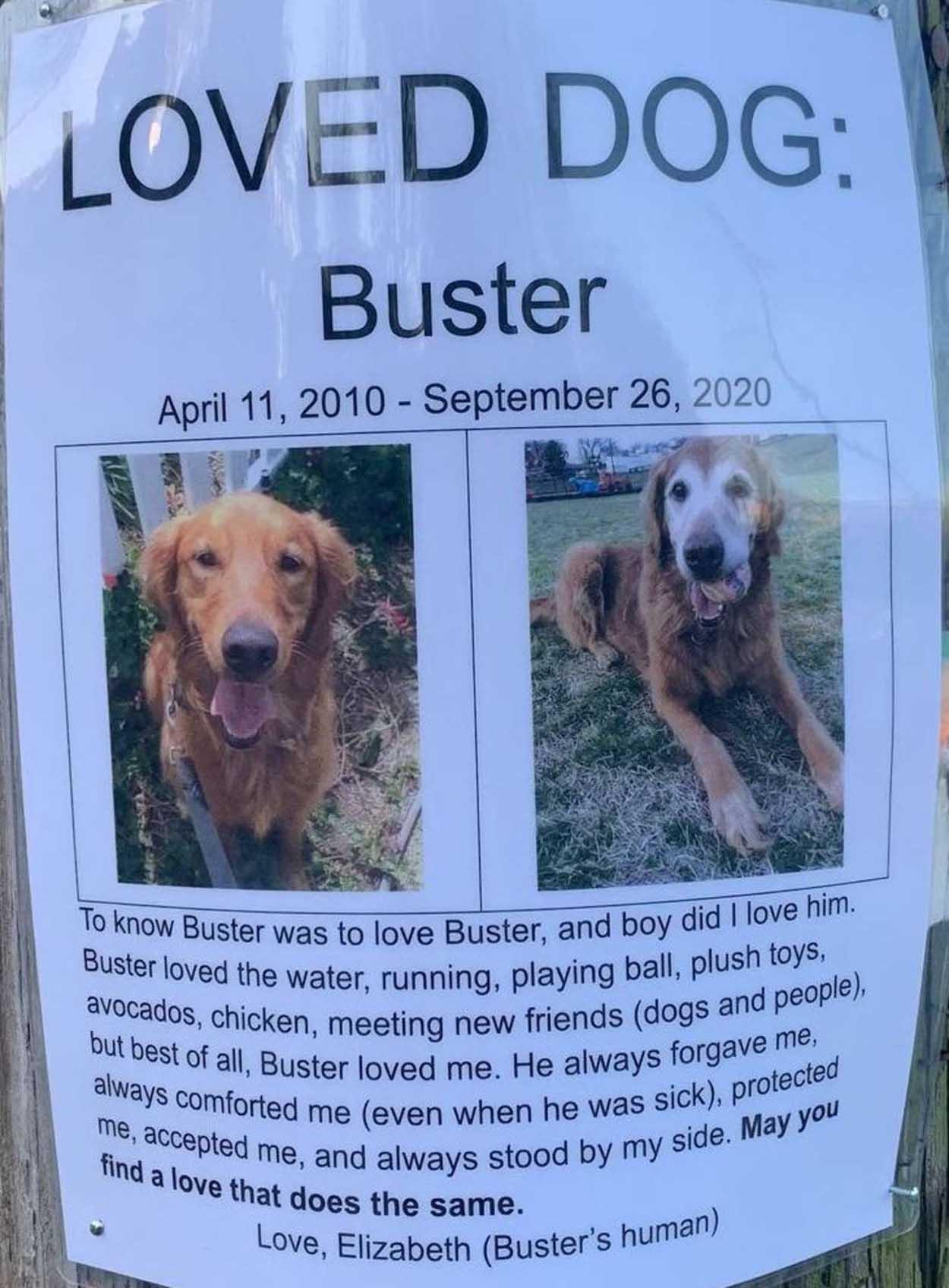 Dulce Póster de perro perdido