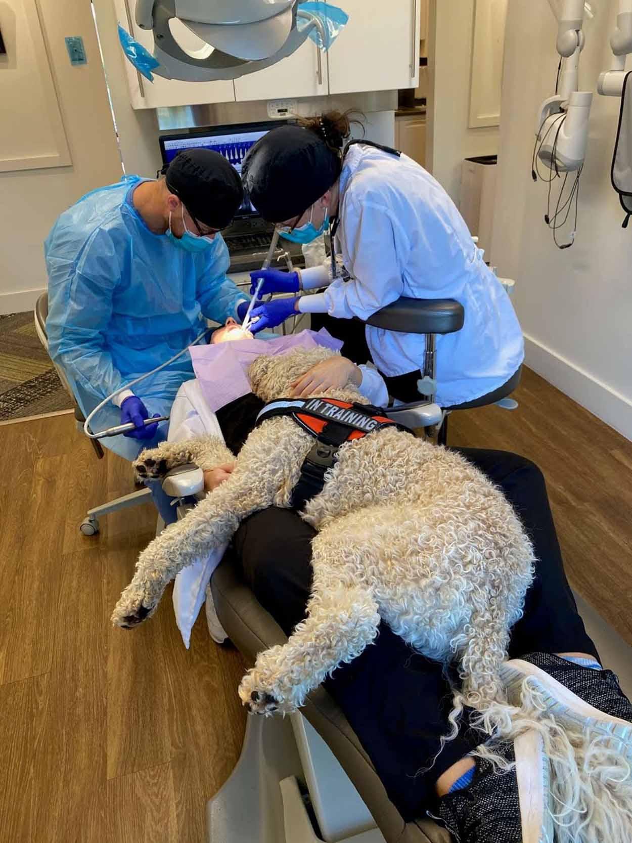 Encantador perro dentista