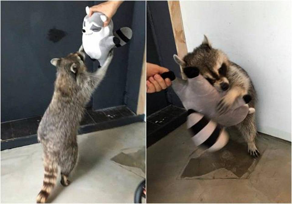 Estas mascotas con peluche