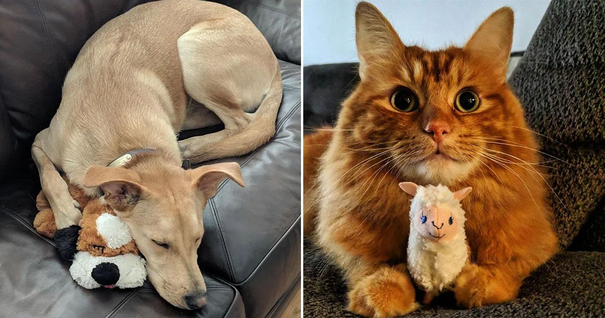 Estas mascotas se niegan a separarse de juguetes