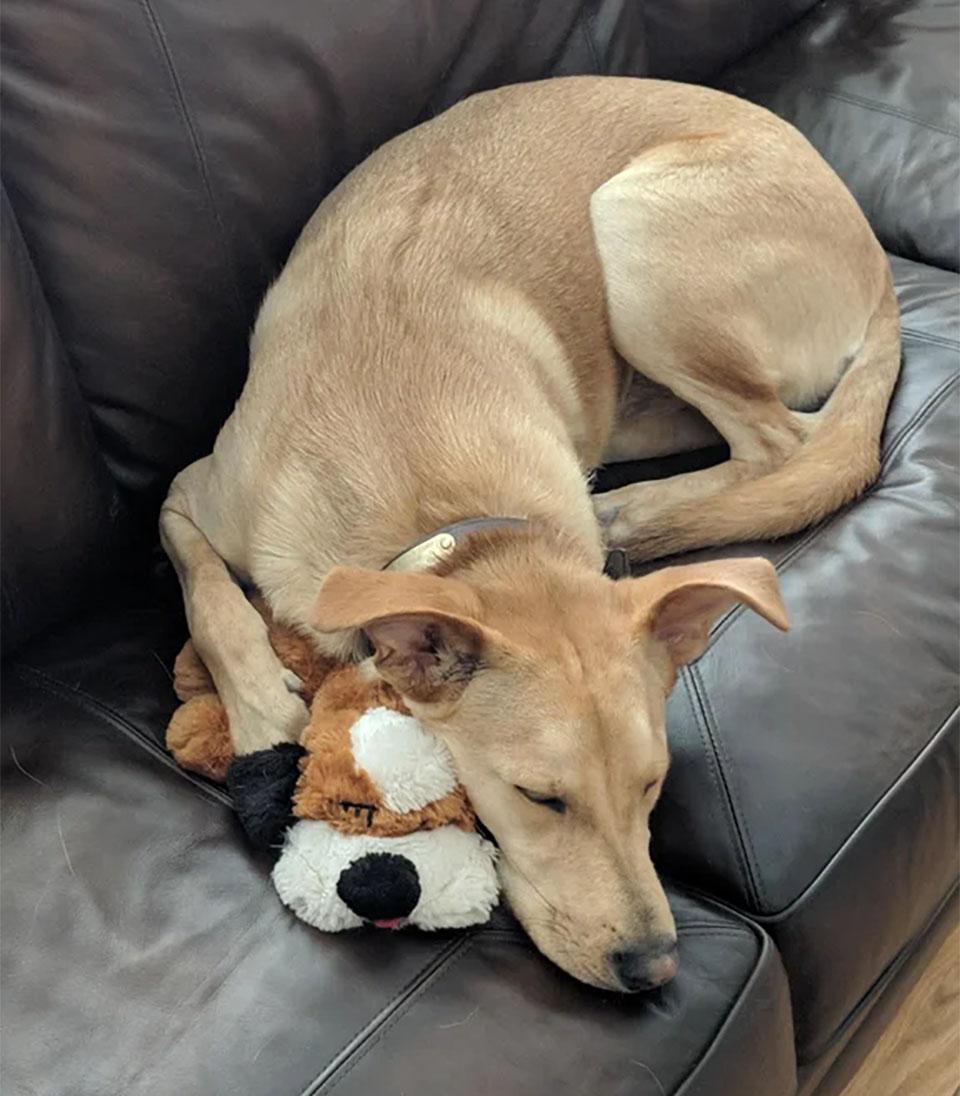 Estas mascotas y juguetes