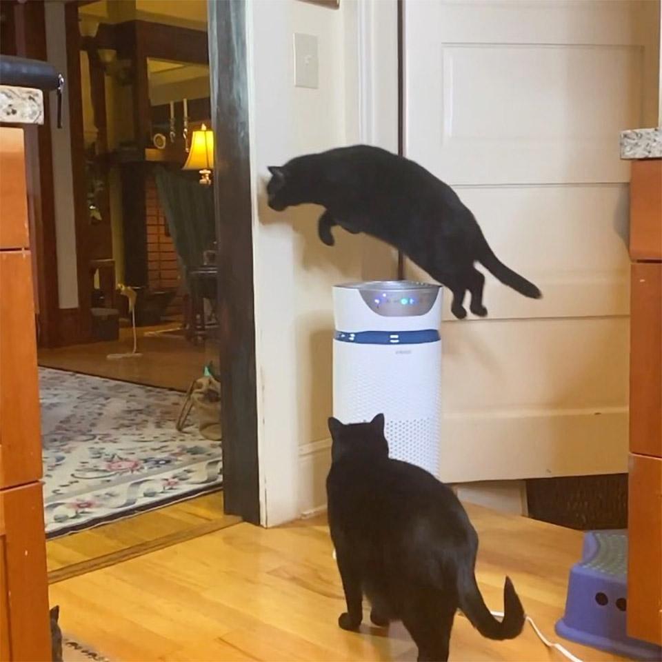 Este gato salta cosas