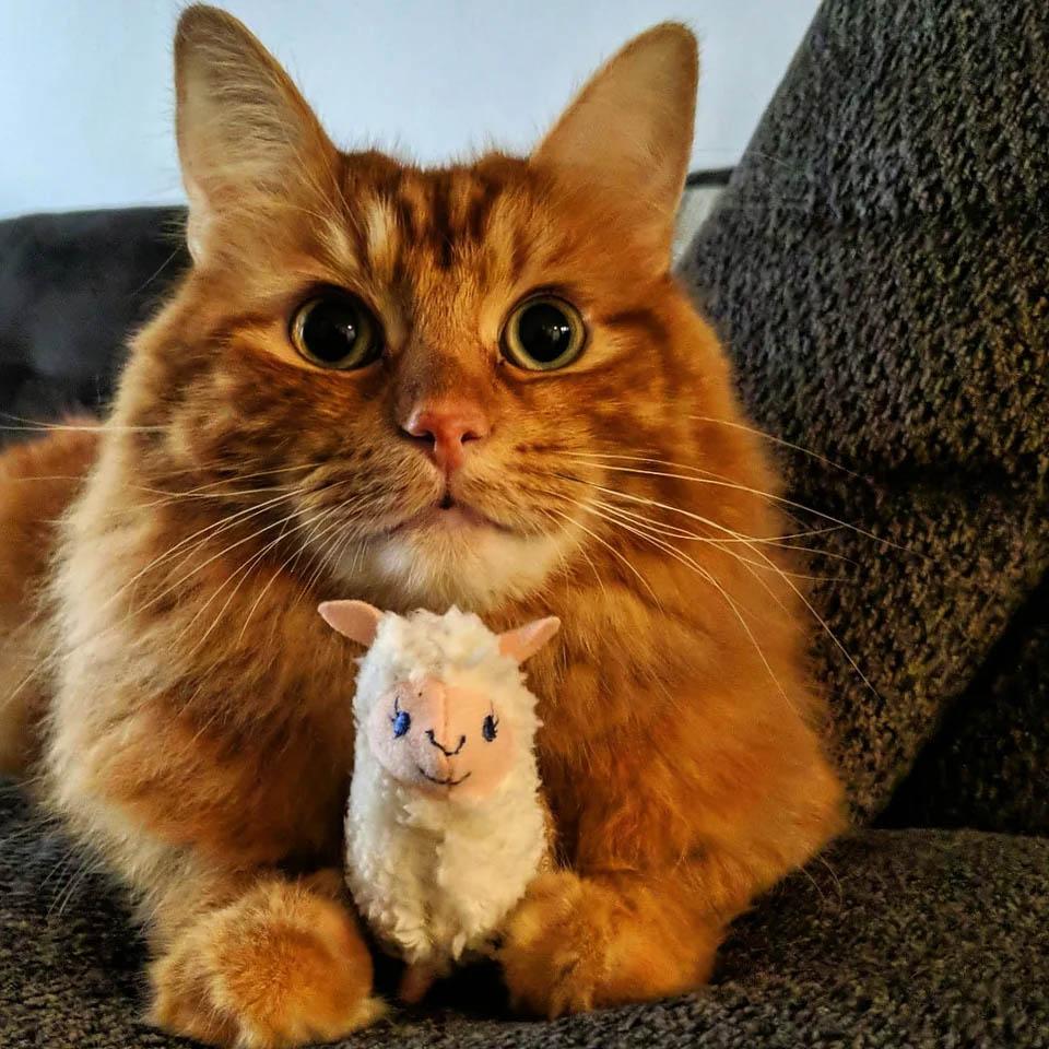Gatito con juguete