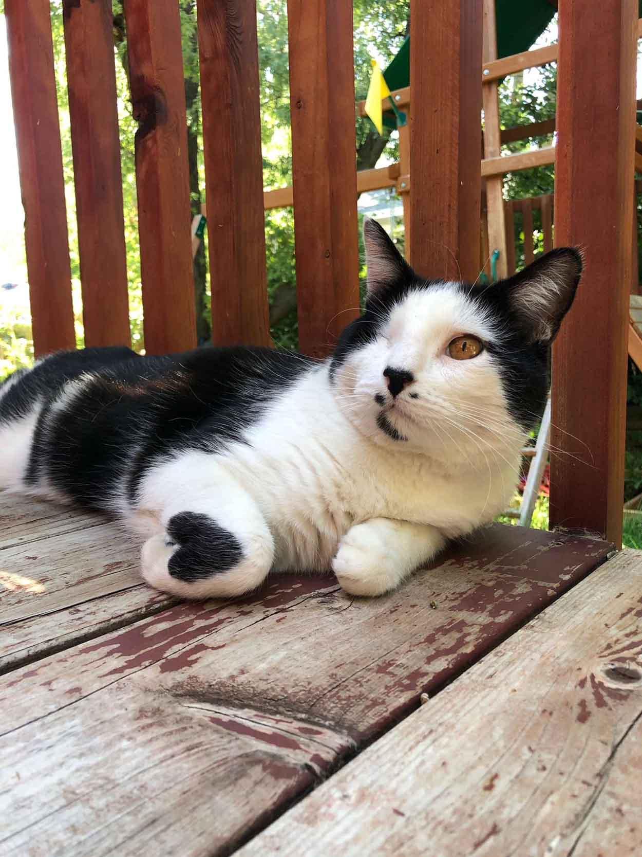 Gatito en el porche