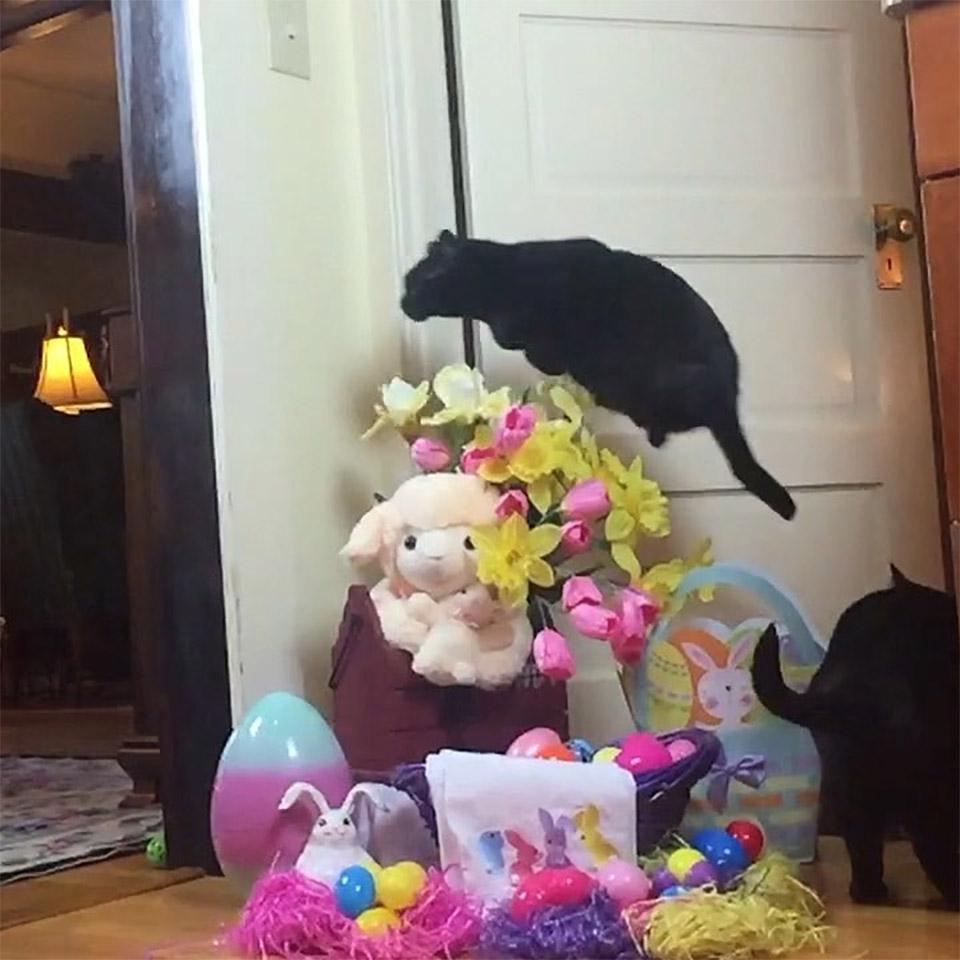 Gato salta peluches