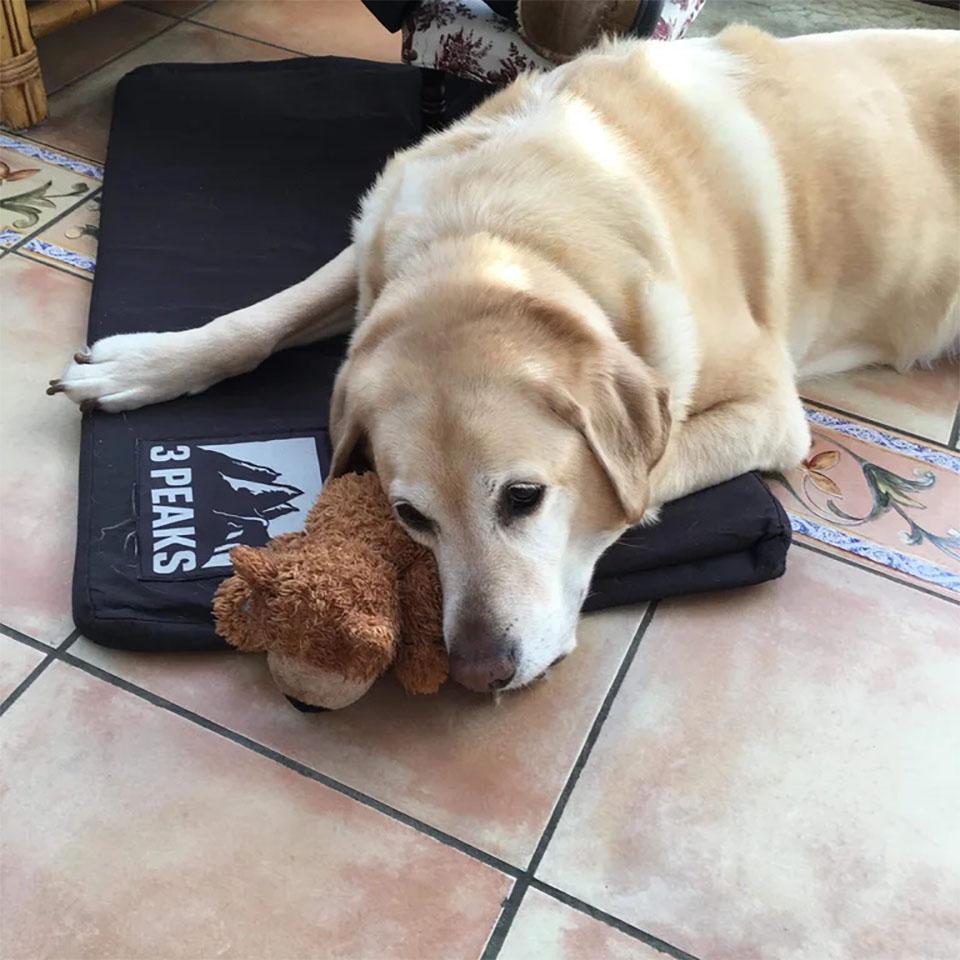 Labrador y juguete