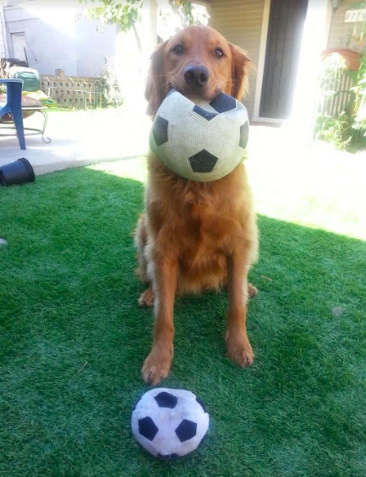 Lindo perro jugando pelota