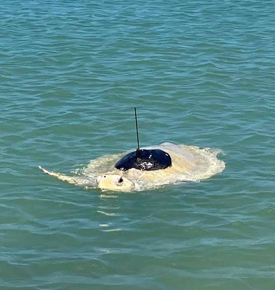 Lou en el mar