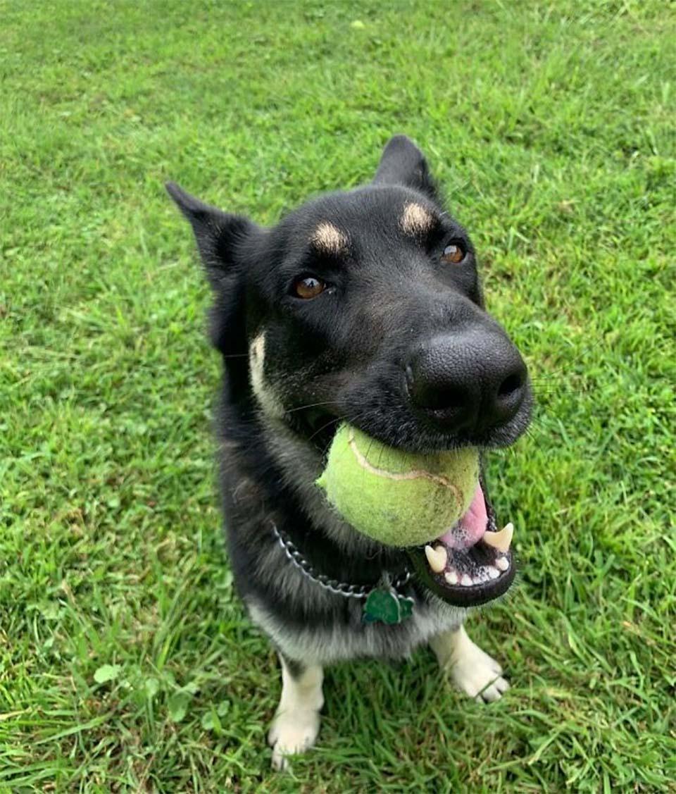 Major, perro rescatado