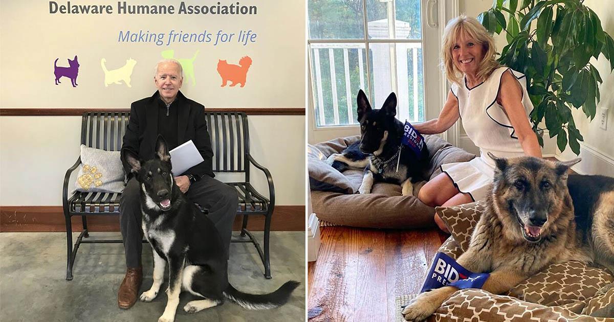 Major, primer perro rescatado que vivirá en la Casa Blanca