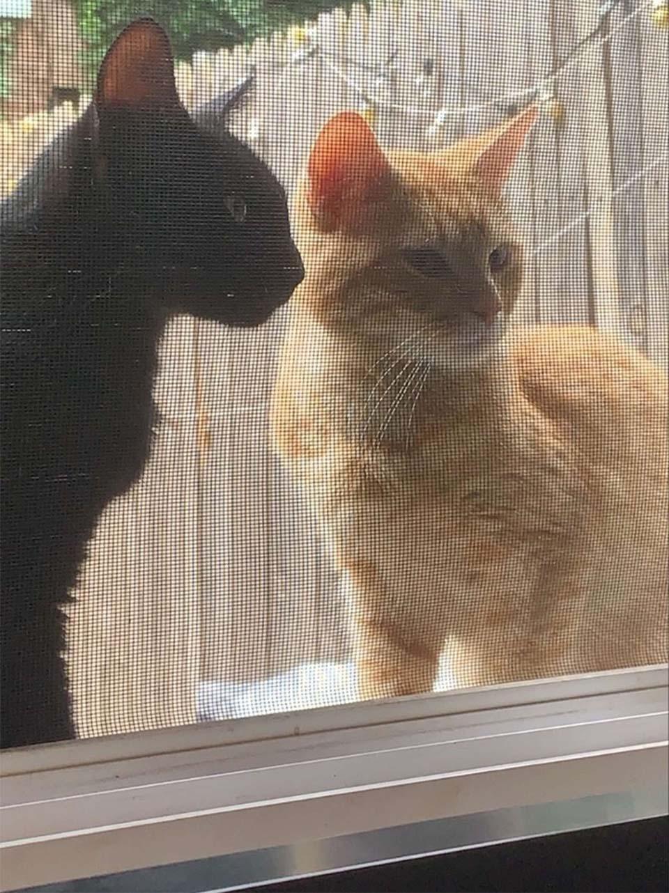 Pareja de felinos