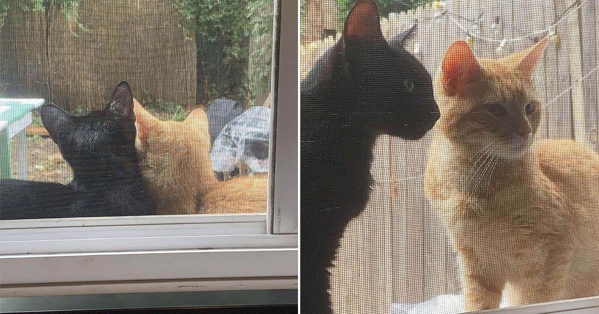 Pareja de gatos pide que los dejen entrar