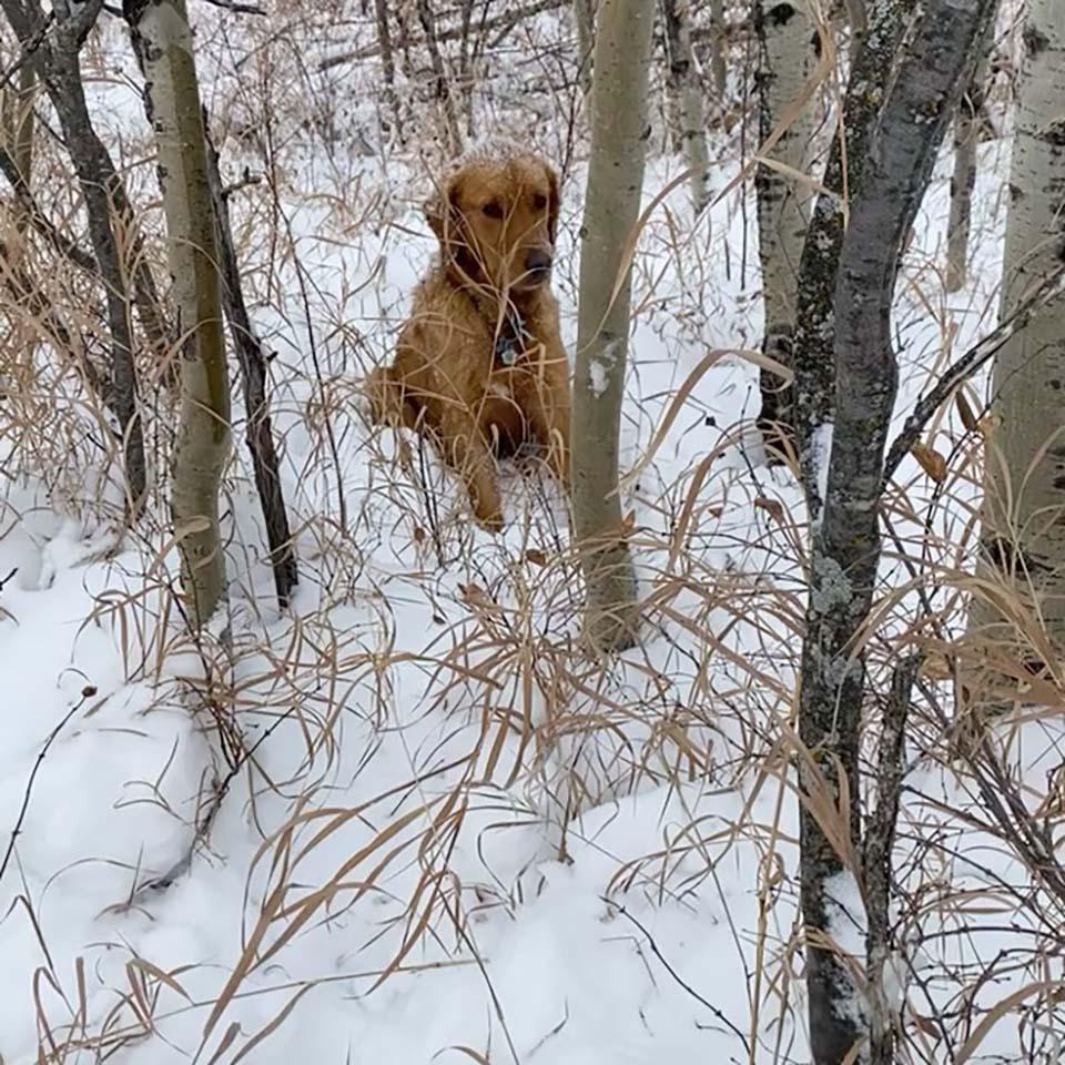 Perrito perdido en la nieve