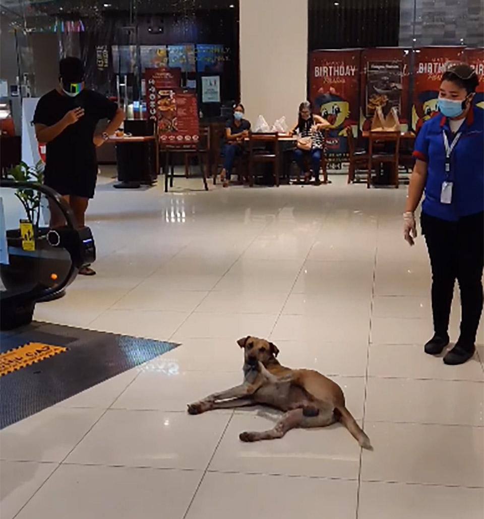 Perro deambulaba adoptado