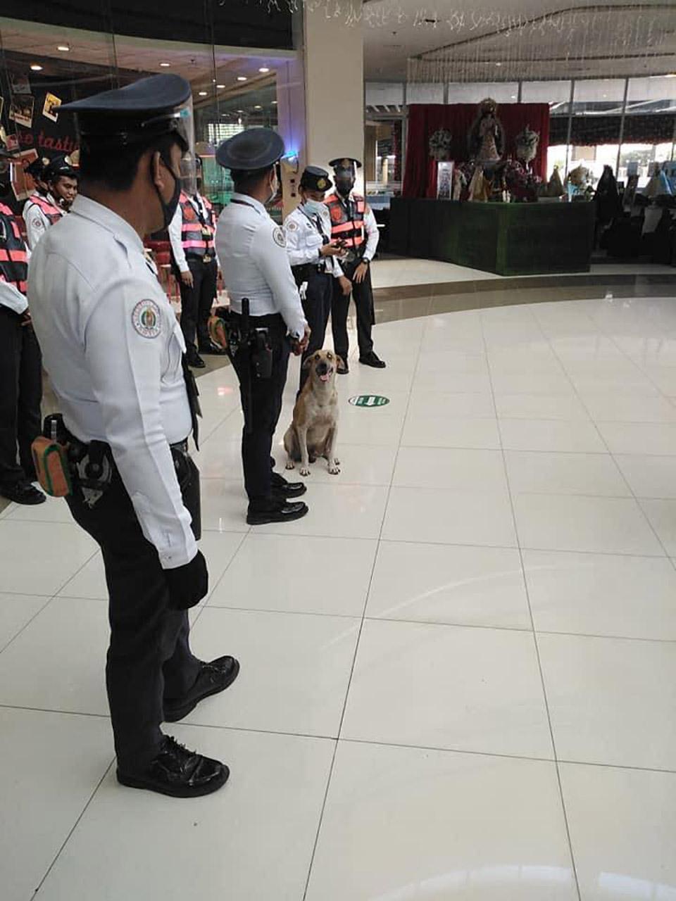 Perro deambulaba centro comercial