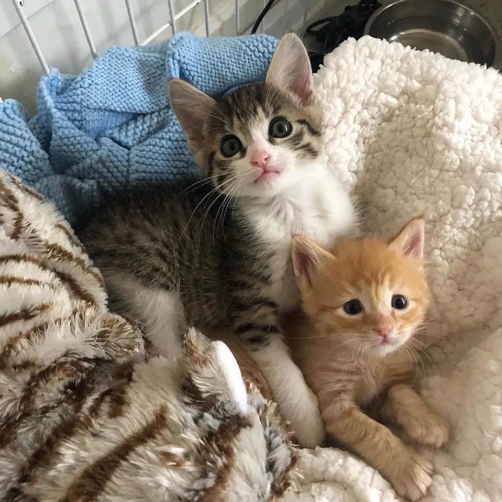 Amigos inseparables