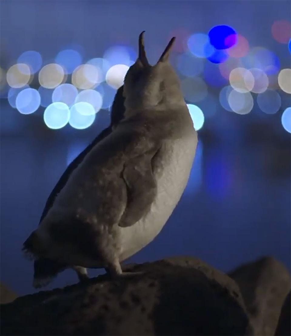 Animales en la roca