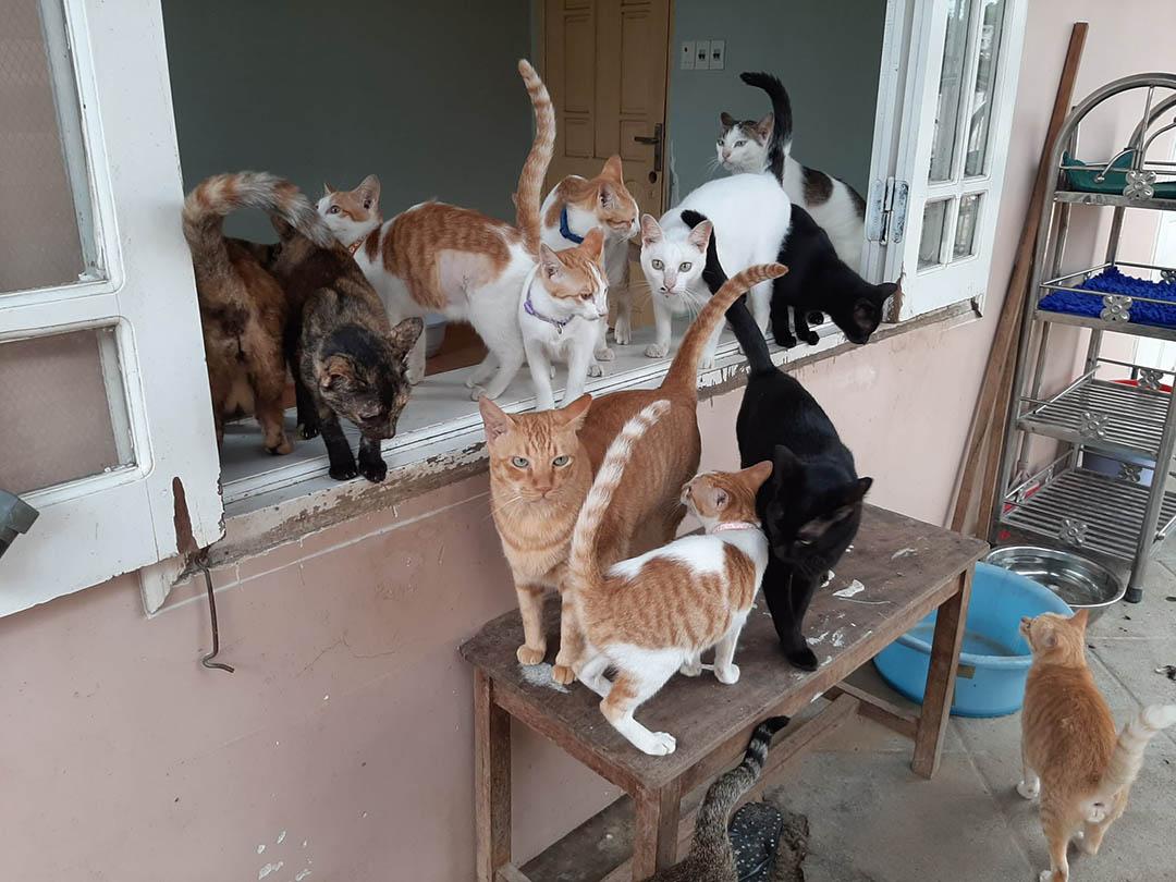 Animales rescatados en refugio