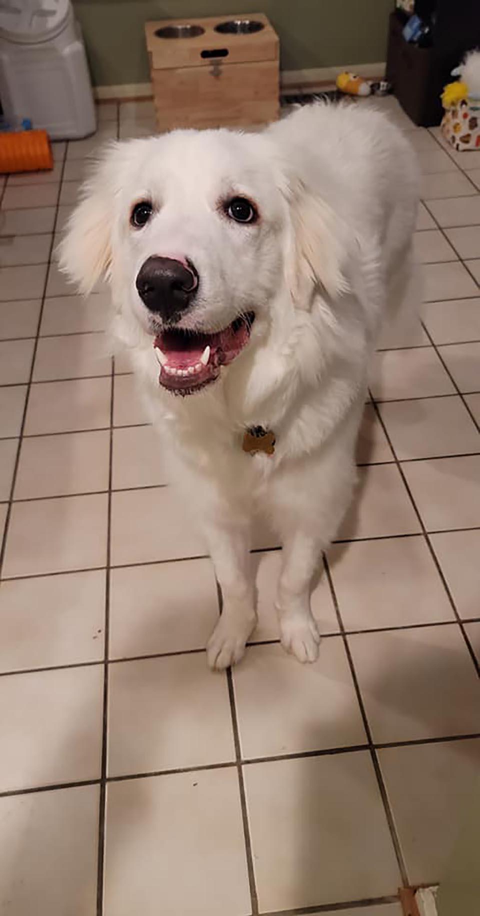 Buen perro salva a su familia