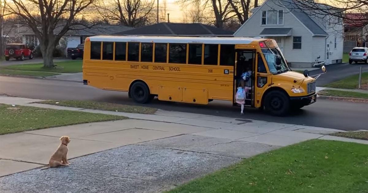 Cachorro asegura niñas suban autobús escolar