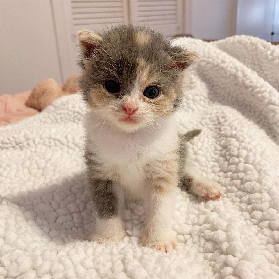 Dulce gatita encontrada amasando
