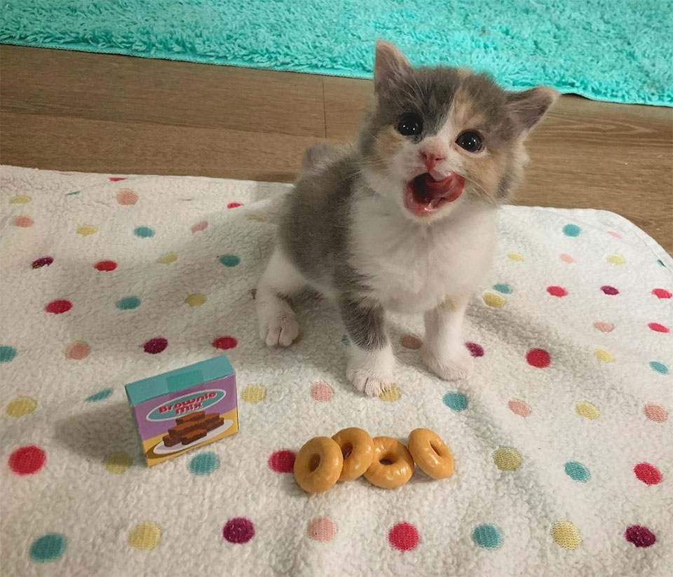 Dulce gatita encontrada comiendo
