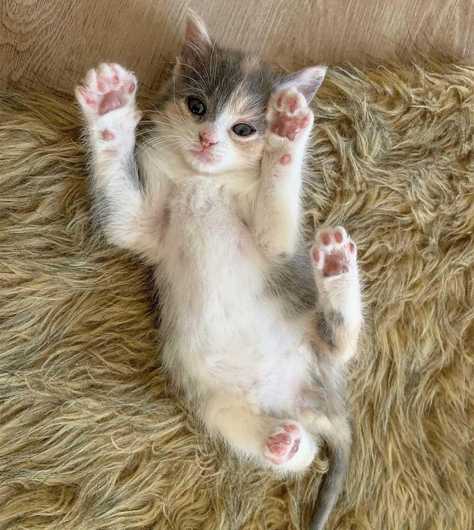 Dulce gatita encontrada jugando