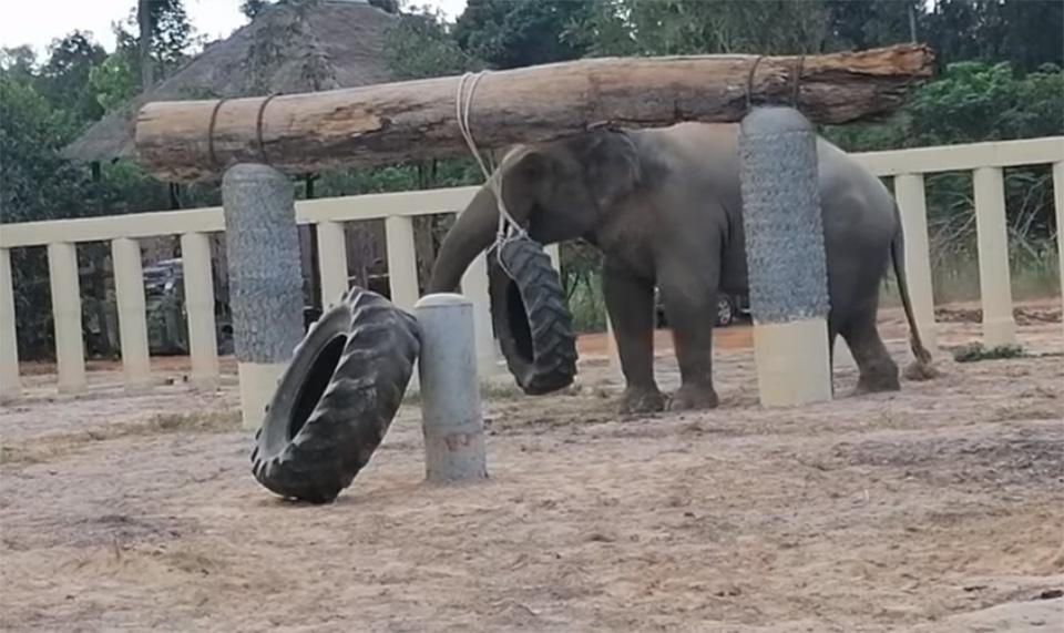 Elefante más solitario jugando
